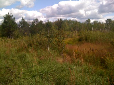 The ball field as it looks today... swampy and overgrown