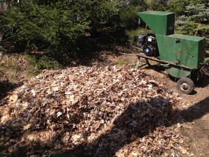 Shredded yard waste